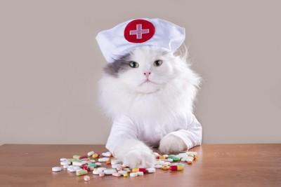看護婦の格好をした白い猫