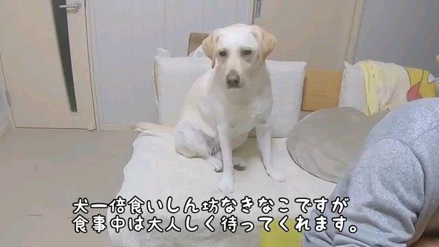 犬一倍~字幕
