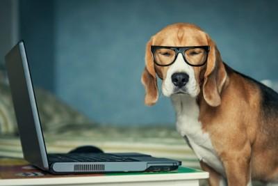 犬眼鏡、PC