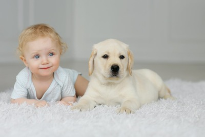 赤ちゃんと同じ格好をする子犬