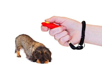 伏せる小型犬とクリッカー