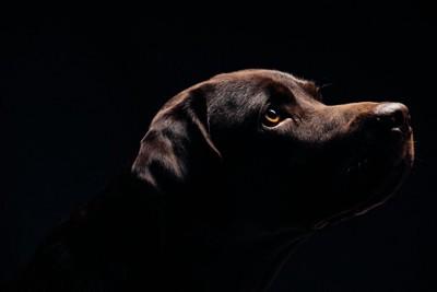 暗がりの犬