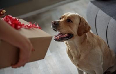 大きい箱を見る犬