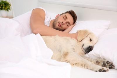 飼い主とベッド寝るゴールデン・レトリーバー