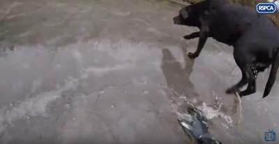 氷上を歩く犬
