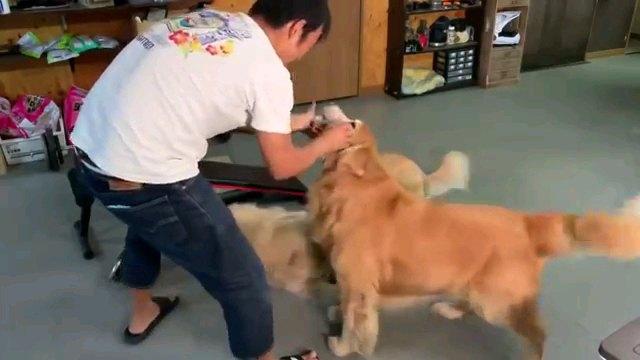 犬と遊ぶ人