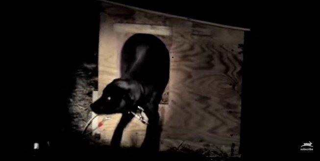 犬小屋から出てくる犬