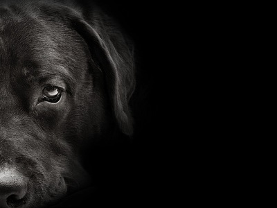 暗い背景の犬