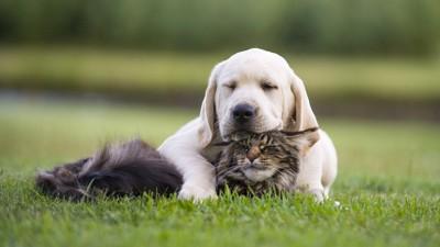 猫の頭にあご乗せする子犬