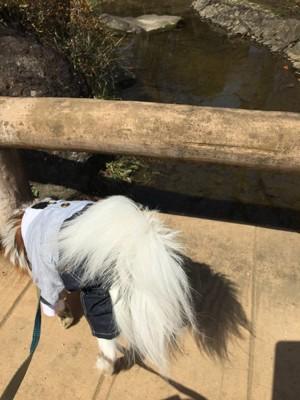 川に興味津々なココア