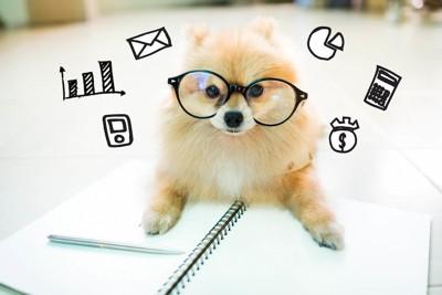 ノートの上に乗るメガネをかけたポメラニアン
