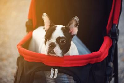 ペットカートに乗った犬と夕焼け