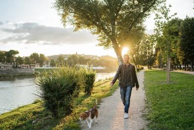 水辺の公園を散歩する犬