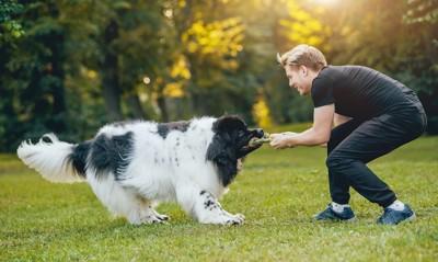 犬と引っ張り合いの遊びをする人