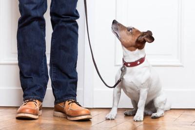 リードを持つ飼い主さんを見上げる犬