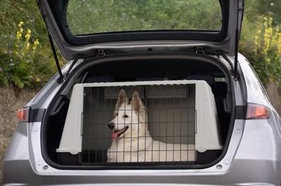 車内でクレートに入った白い犬
