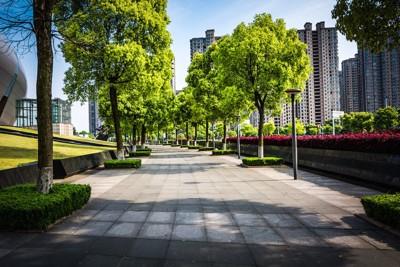 街路樹のある都市景観