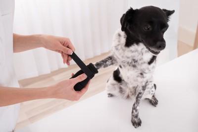 手に黒いテーピングをしてもらっている犬