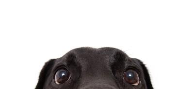 こちらを覗く犬の顔アップ