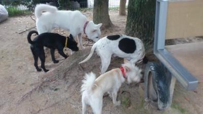 他犬が居ない時間に他の3頭とドッグランで走らせます