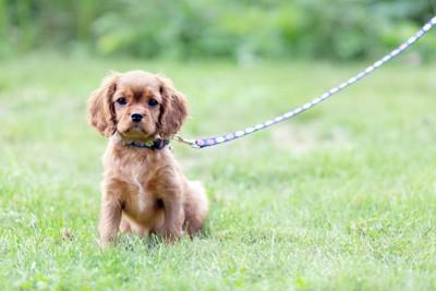 散歩中に芝生の上に座る犬