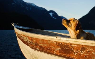 船に乗る犬