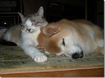 猫とくつろぐメリー