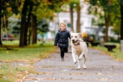 走るラブラドールと追う子供
