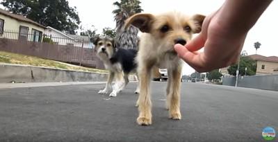 手から食べる子犬