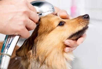 シャワーヘッドを体に密着させる犬