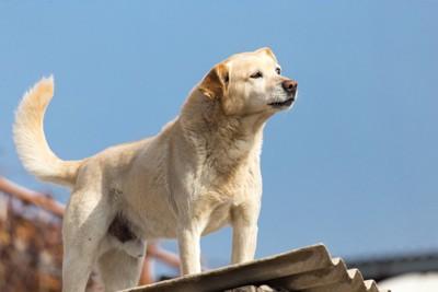 高い場所に立っている犬