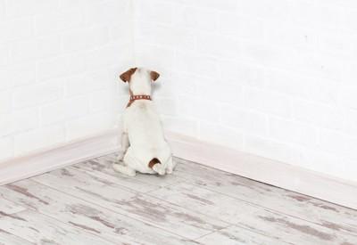 背を向けて排泄の体勢をしている犬