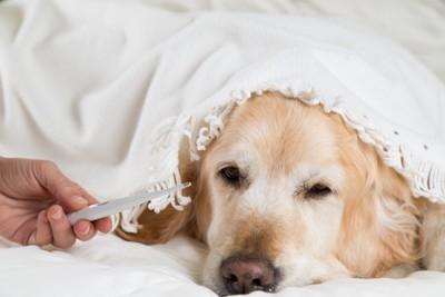 体温を測る犬