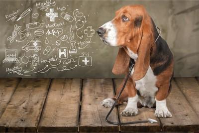医療系のイラストと犬