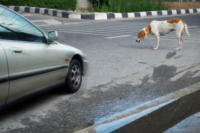 道にいる犬