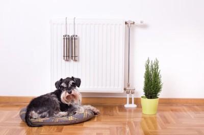 暖房器具の前に陣取る犬