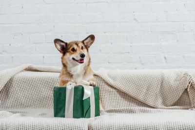 プレゼントを喜ぶ犬