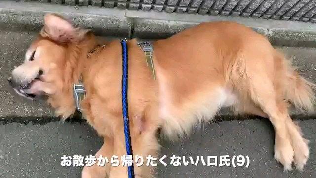 お散歩~字幕