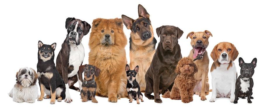 さまざまな犬の集合写真