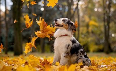 落ち葉を見上げる犬