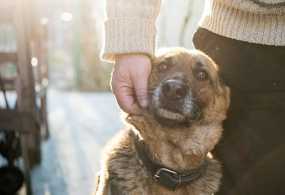 犬を撫でる手