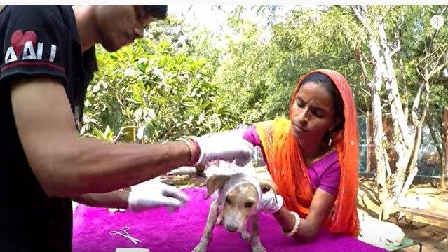 治療をうける子犬