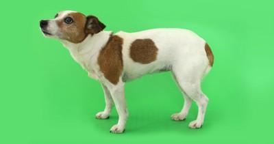 軽く背中が丸まる犬