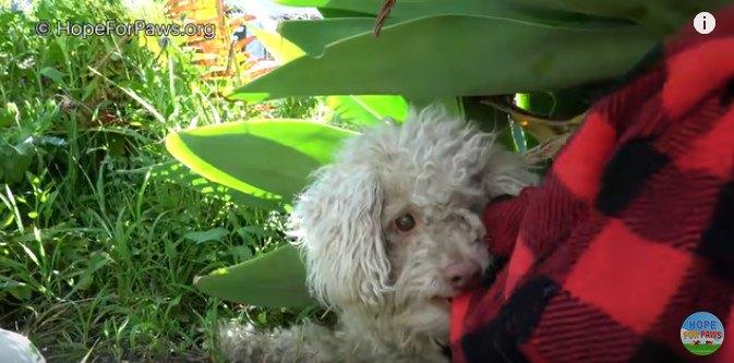 毛布を咬む犬