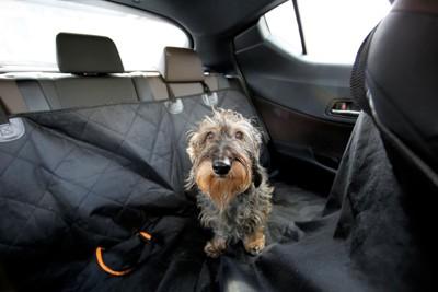後部座席の犬