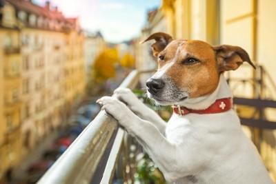 ベランダの柵に手を置いて景色を眺める犬
