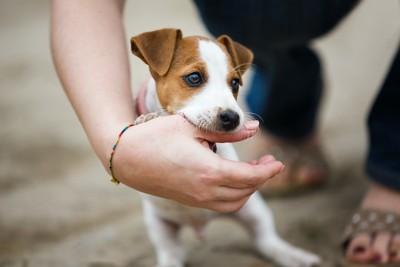 人の手を噛む子犬