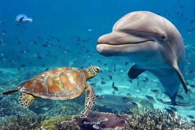 ウミガメの近くで泳ぐイルカ