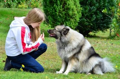 座って飼い主の顔を見つめている犬
