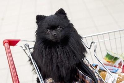 ショッピングカートの中の黒いスピッツ
